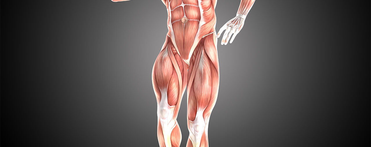 How Does the Muscle Grow?