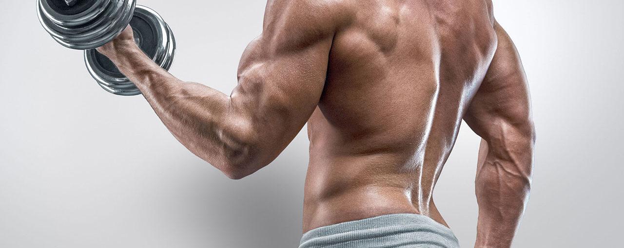 Split Bicep Workout