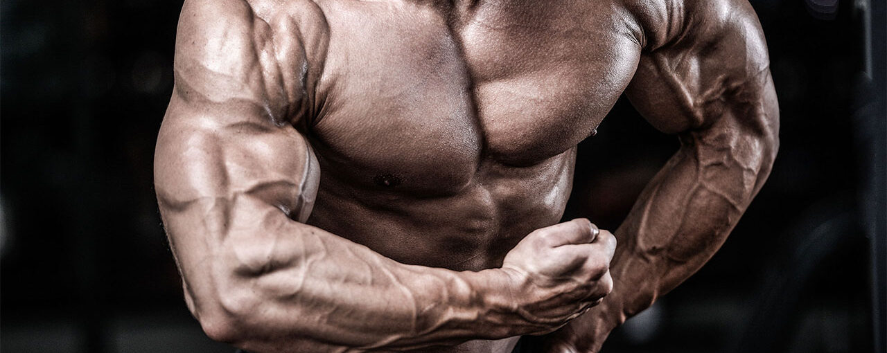 Building Big Muscles Workouts